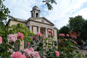 The neo-classical facade of St John's Wood Church, viewed through a pink rose bush.